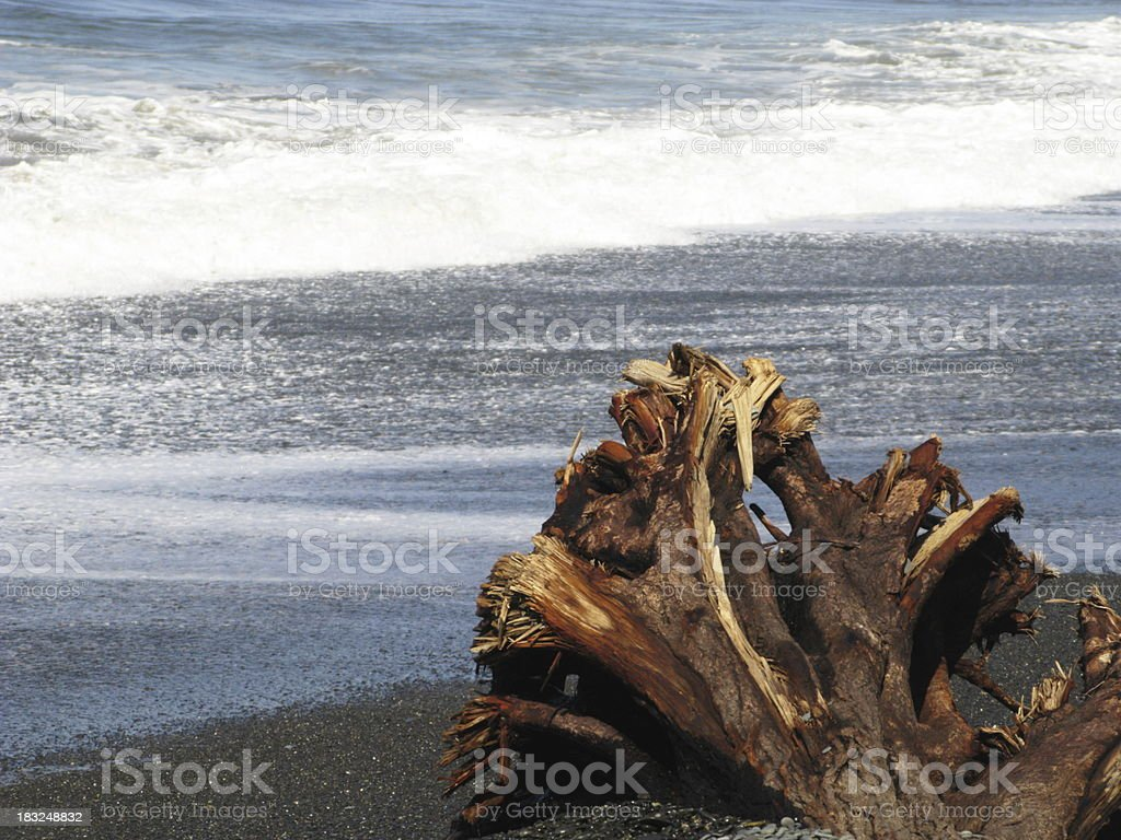 Ocean Wave Tree Trunk Pacific Coast stock photo