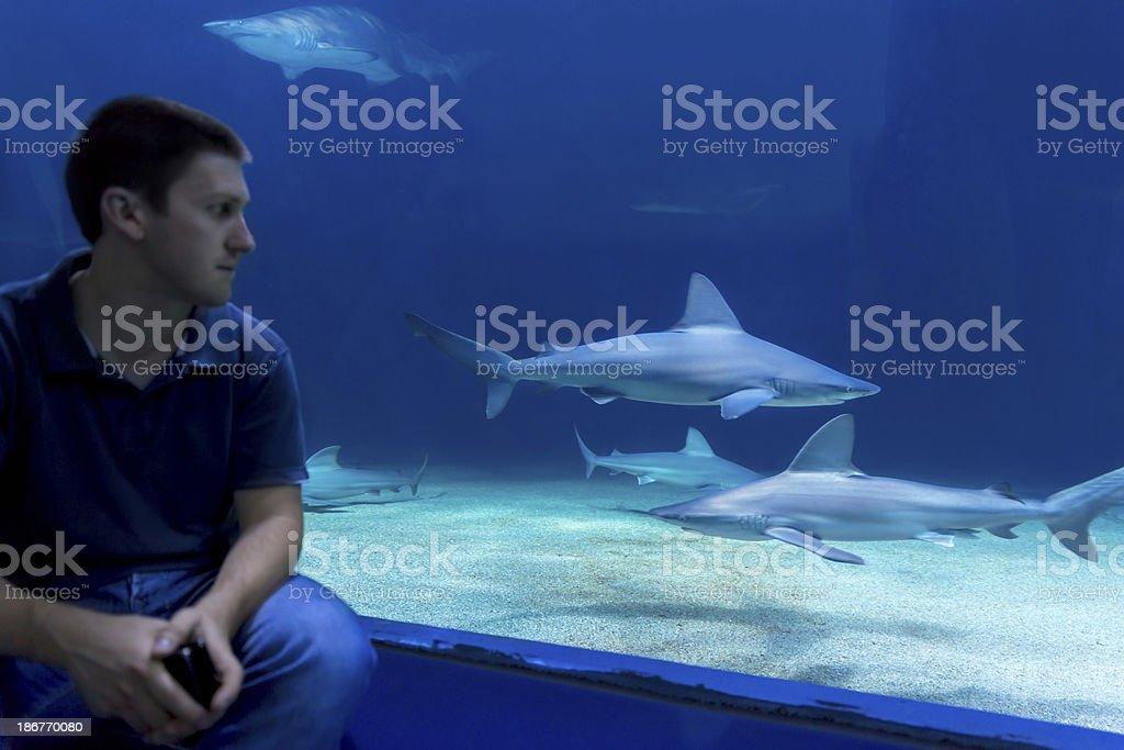 Oceanarium - aquarium stock photo