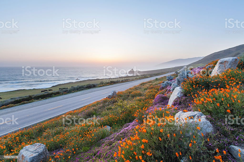 Oceanic view containing a  street and flowers royalty-free stock photo