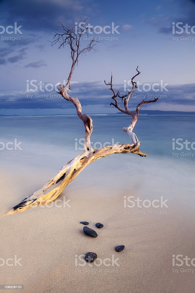 Oceanside Sunset with Zen-Like Tree royalty-free stock photo