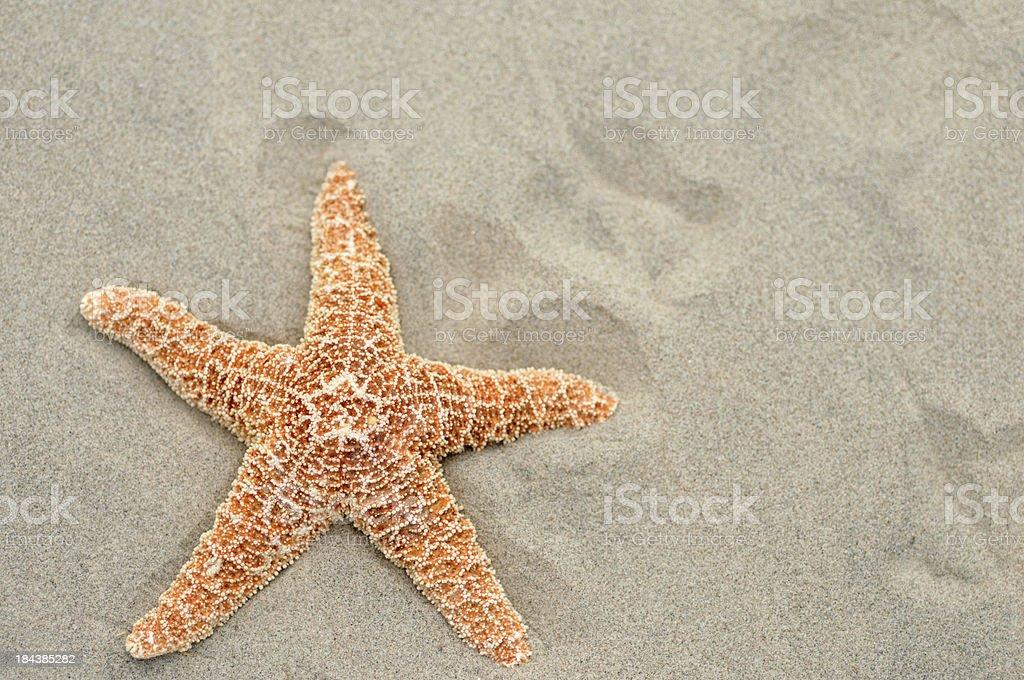 Ochre Starfish Forcipulatida stock photo