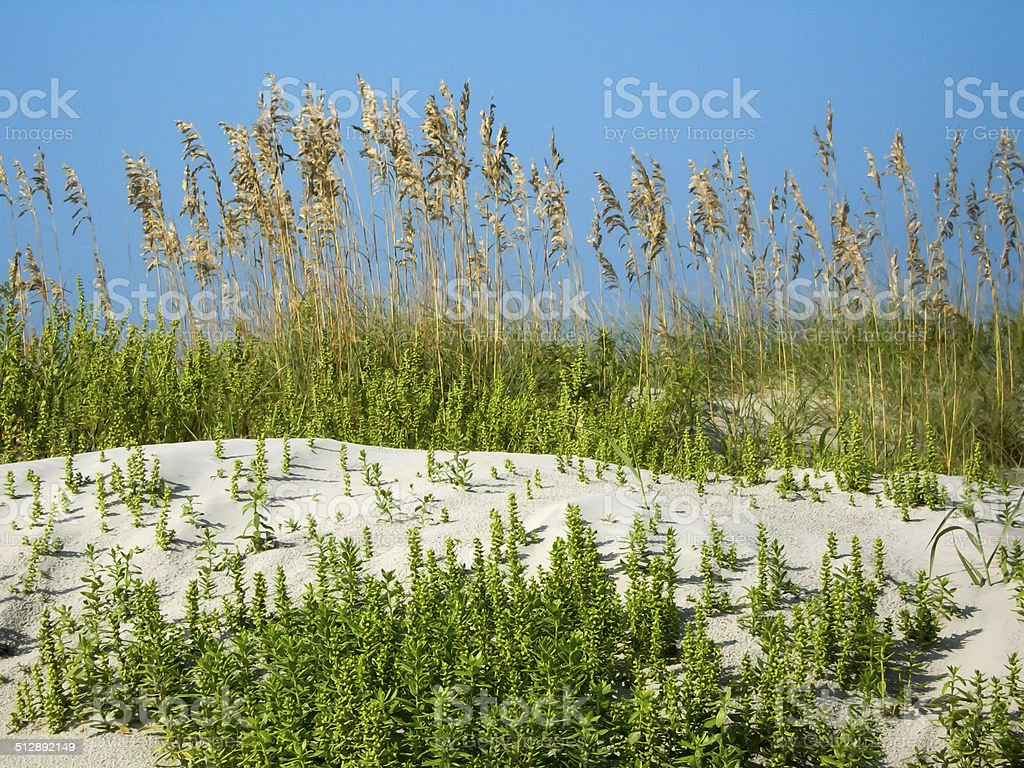 ocracoke island dunes stock photo