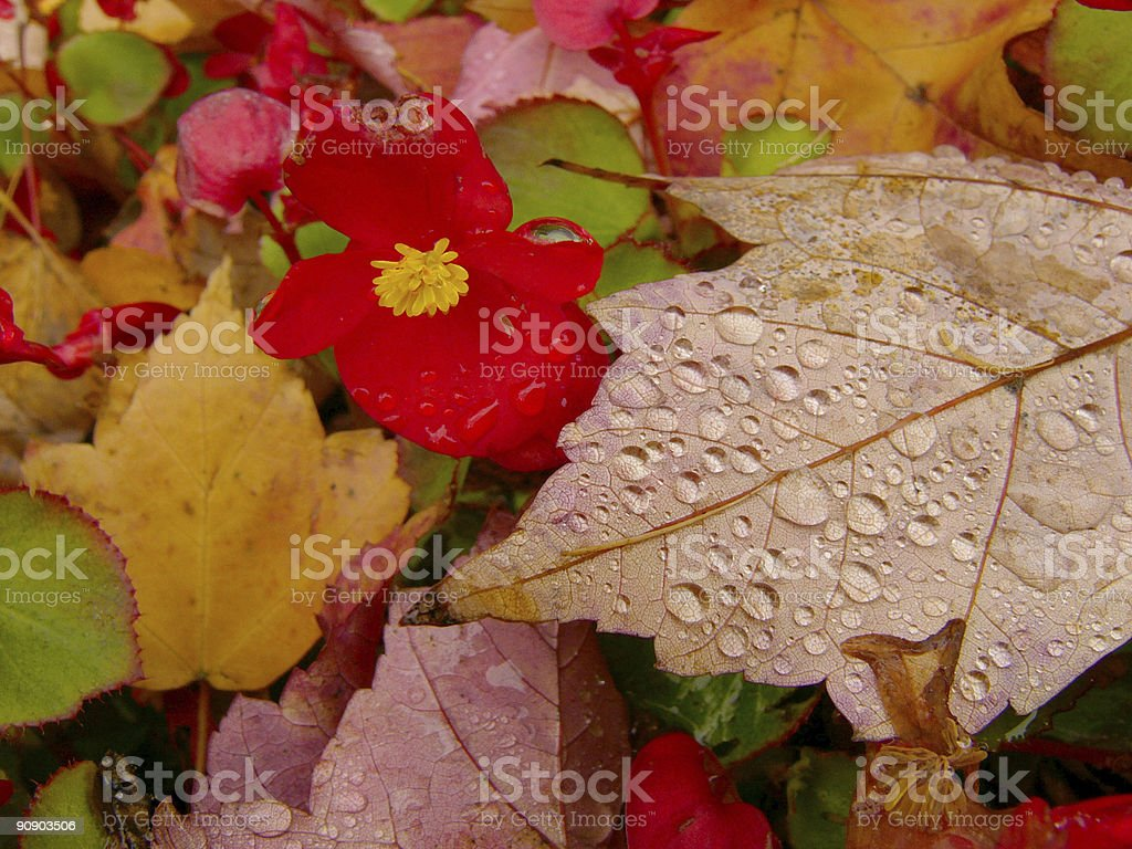 October colors royalty-free stock photo