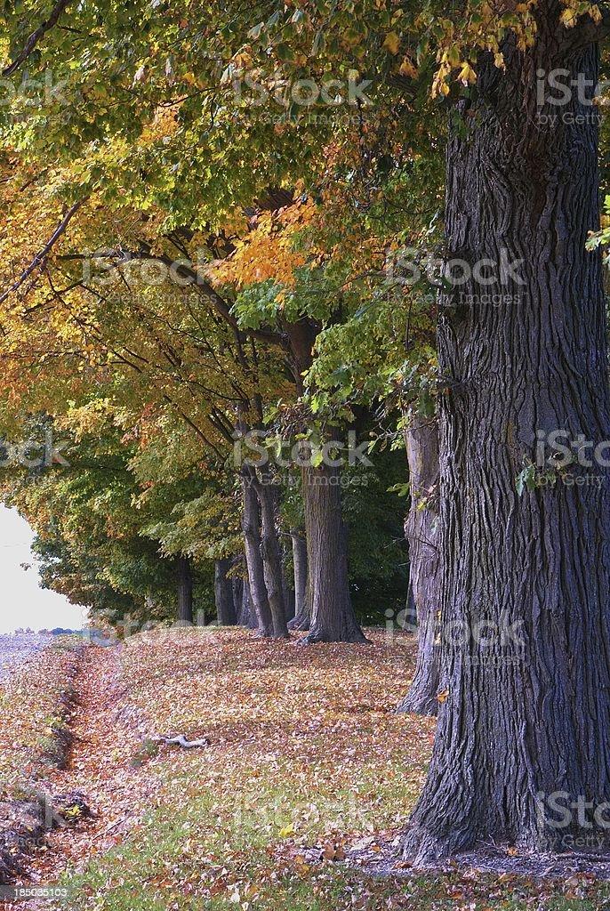 October Splendor royalty-free stock photo