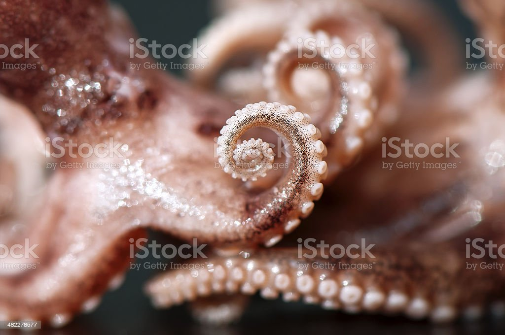 Octopus arms stock photo