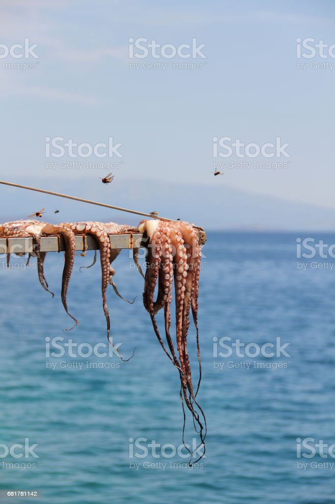 octopus drying at the sun in chios island foto de acervo