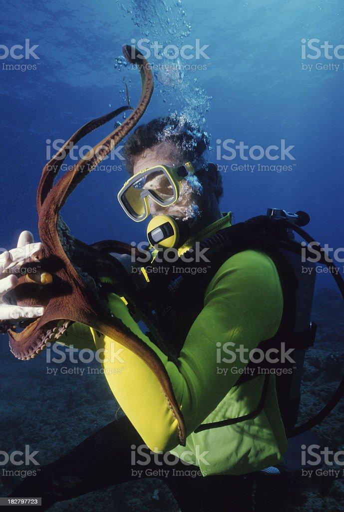 Octopus Encounter stock photo