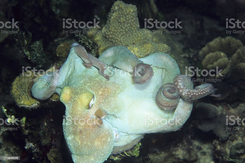 Octopus Garden stock photo