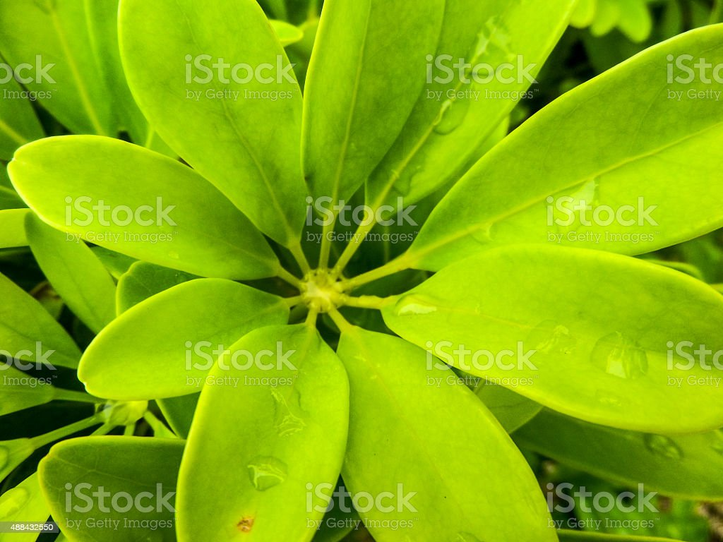 Octopus leafs stock photo