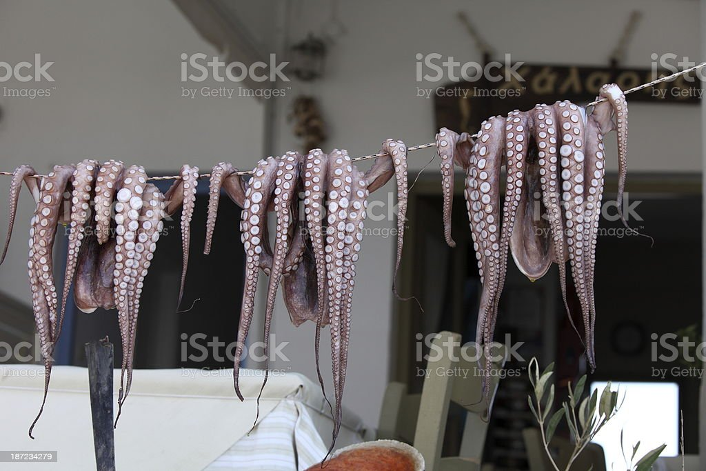 Octopus on a string royalty-free stock photo