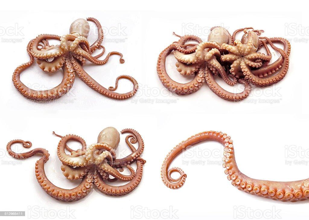 Octopus on white background stock photo