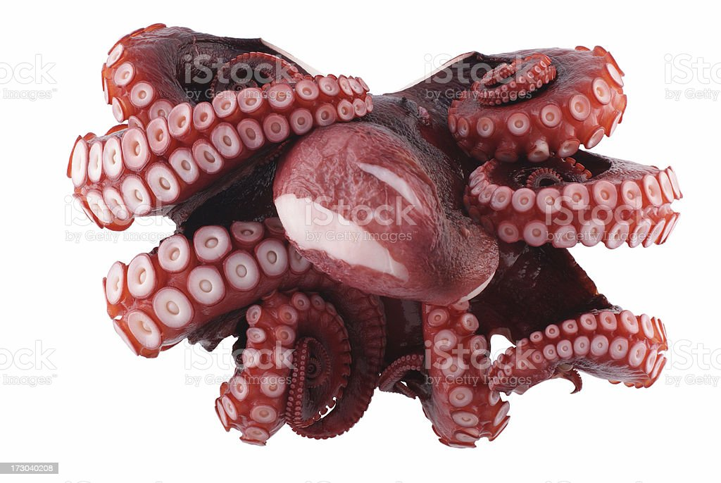 Octopus, Top View royalty-free stock photo