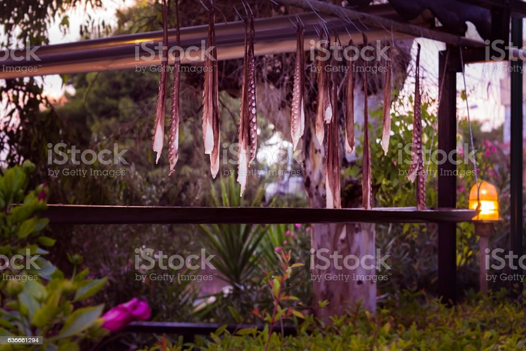 Octopuses hanging on a string stock photo