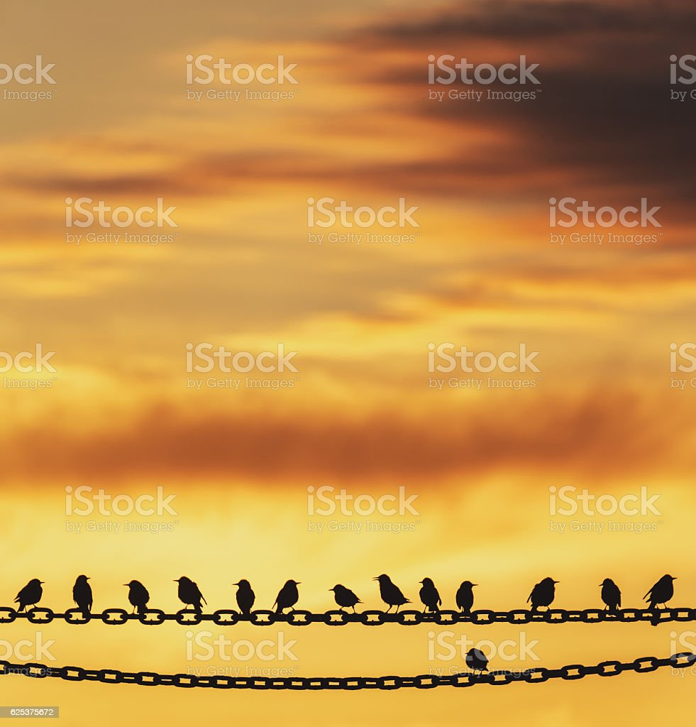 Odd Bird Out stock photo