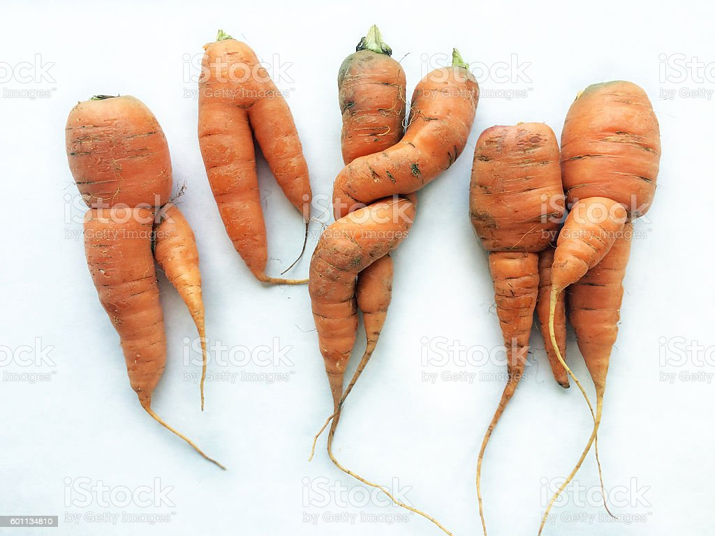 Odd shaped carrots on white cardboard stock photo