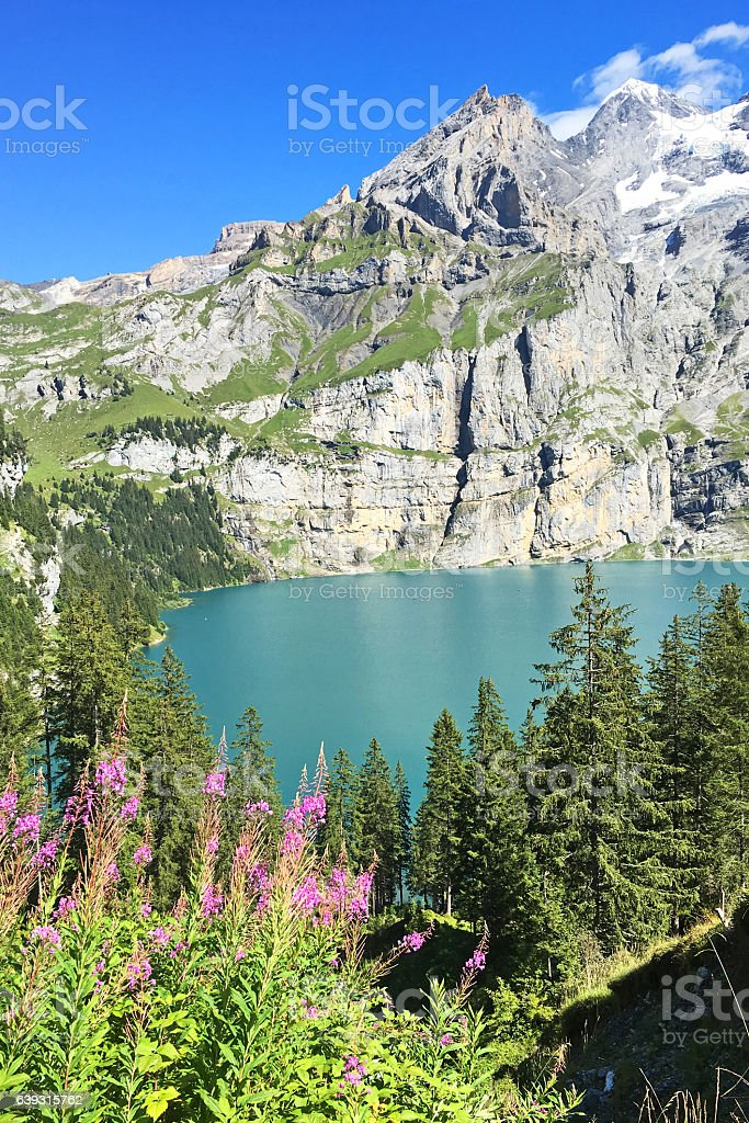 Oeschinensee Mountain Lake with Summer Flowers in the Swiss Alps stock photo