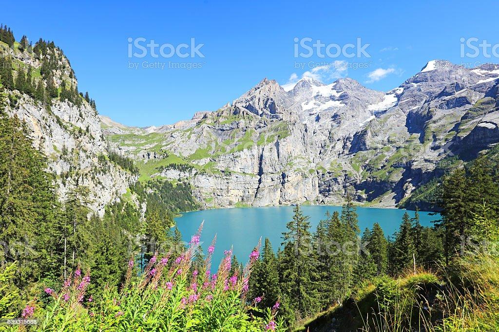 Oeschinensee Mountain Lake with Summer Flowers Switzerland stock photo