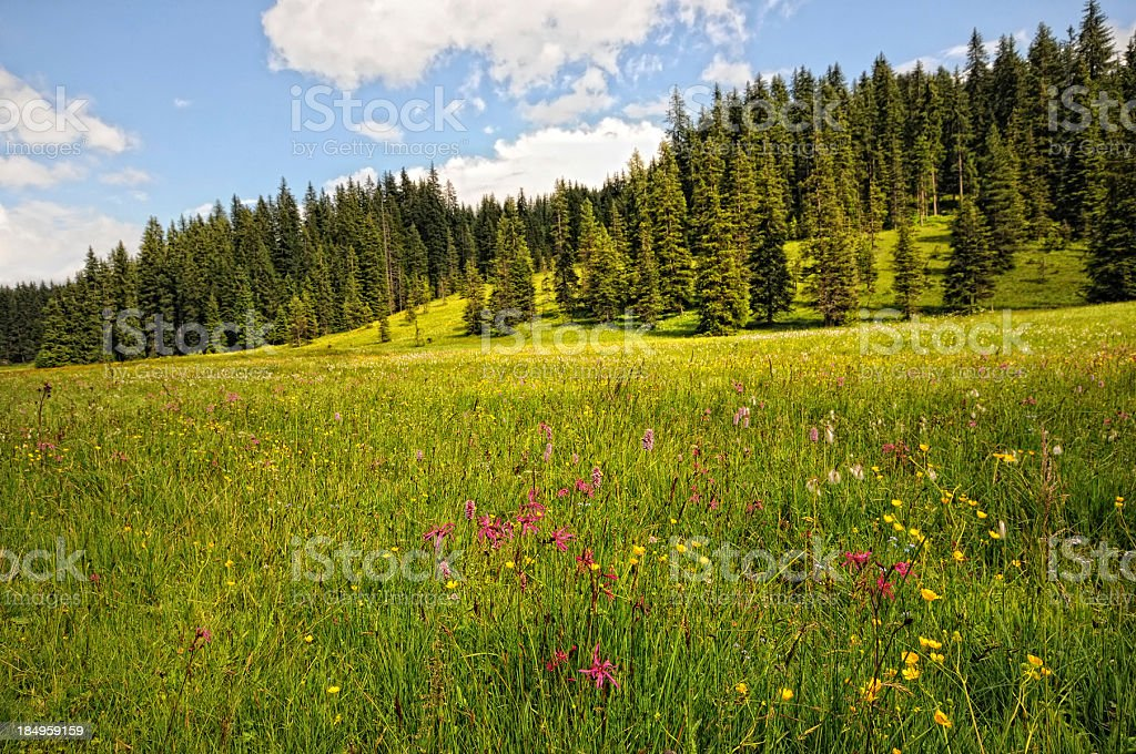HDR of flower meadow at Zillertal Alps landscape (Austria) royalty-free stock photo