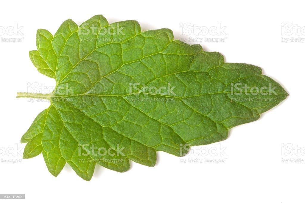 of lemon balm leaf isolated on white background stock photo