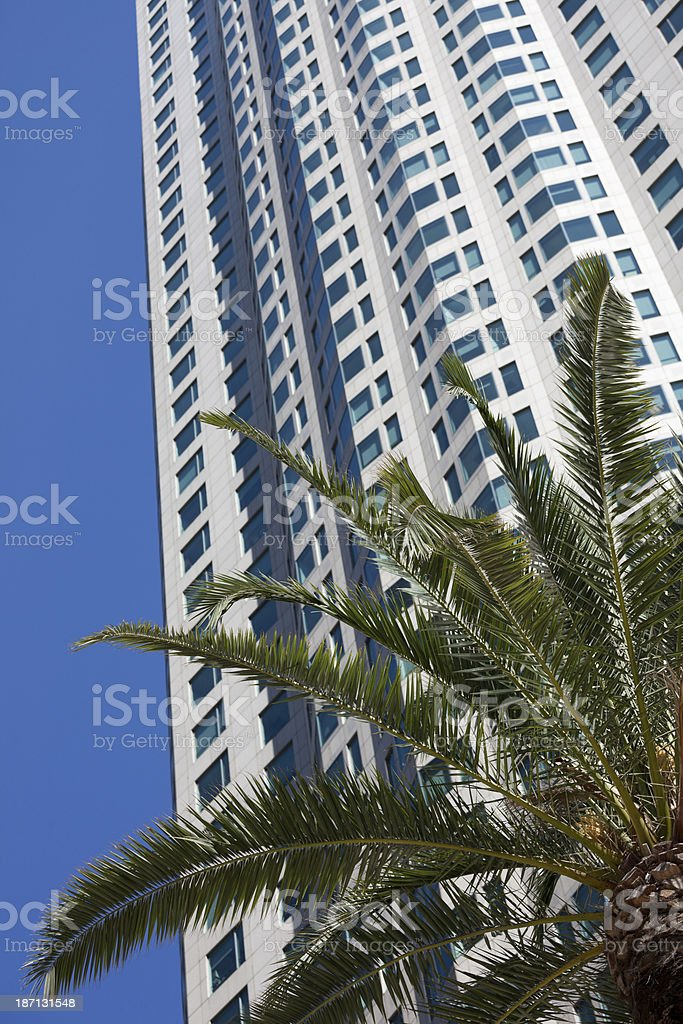 office building and Palme tree in downtown Los Angeles royalty-free stock photo