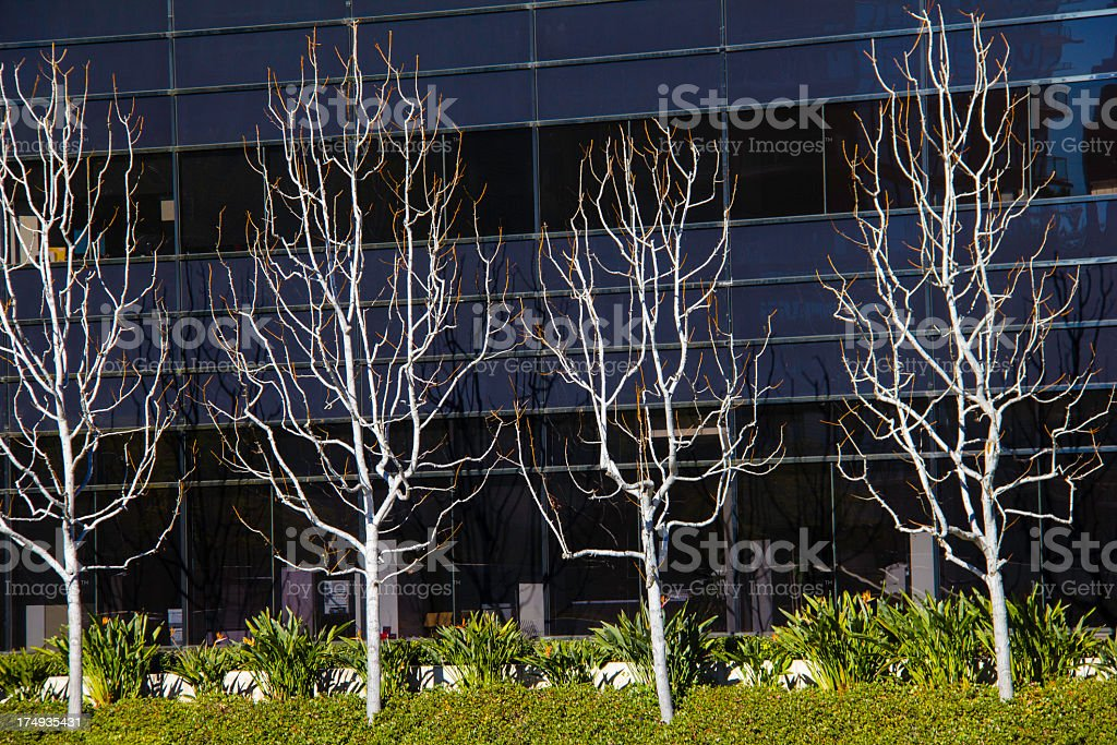 Office building detail with row of trees (P) royalty-free stock photo