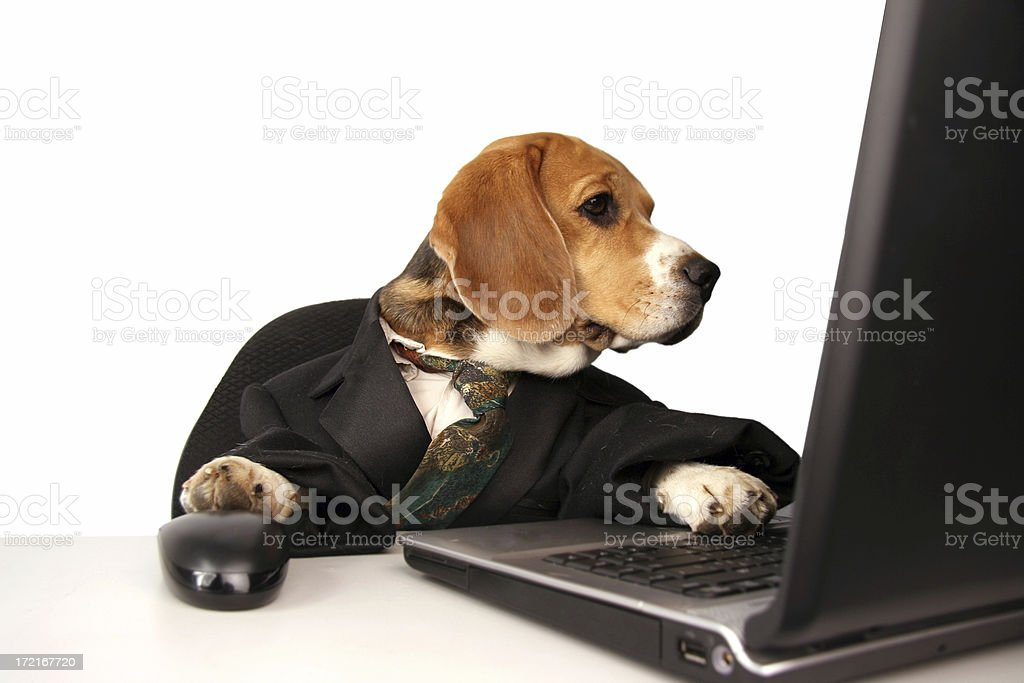 Office  dog royalty-free stock photo