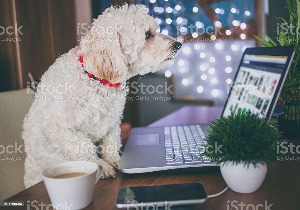 Office dog stock photo