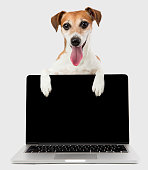 office manager dog with black screen laptop computer