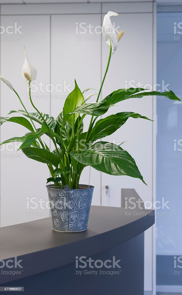 Office reception desk with plant stock photo