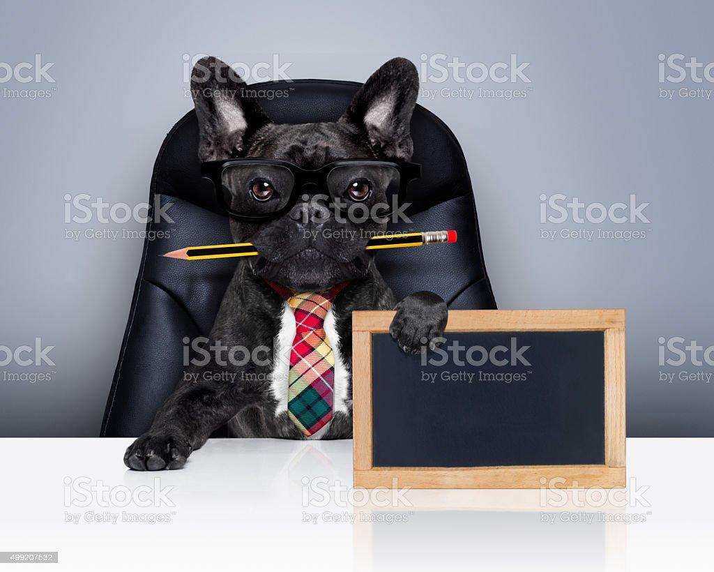 office worker boss dog stock photo
