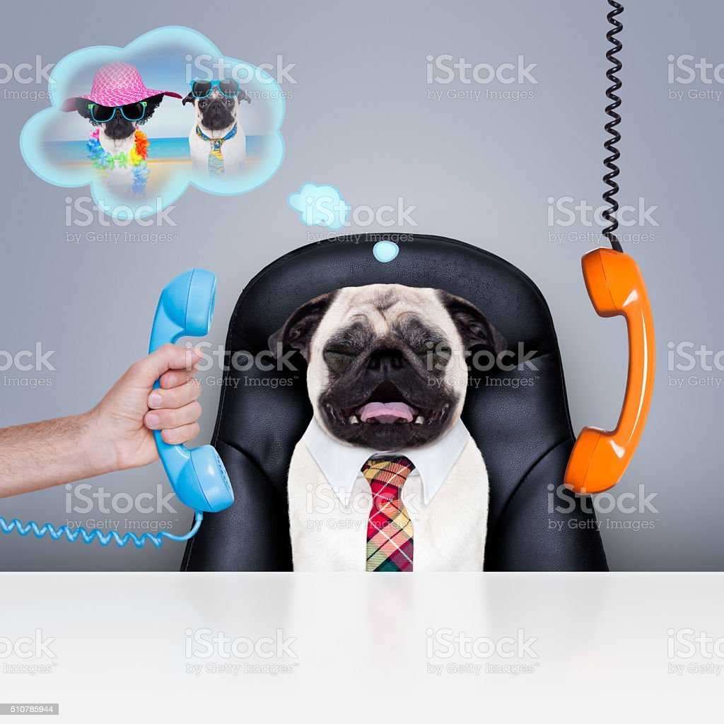 office worker boss dog stock photo