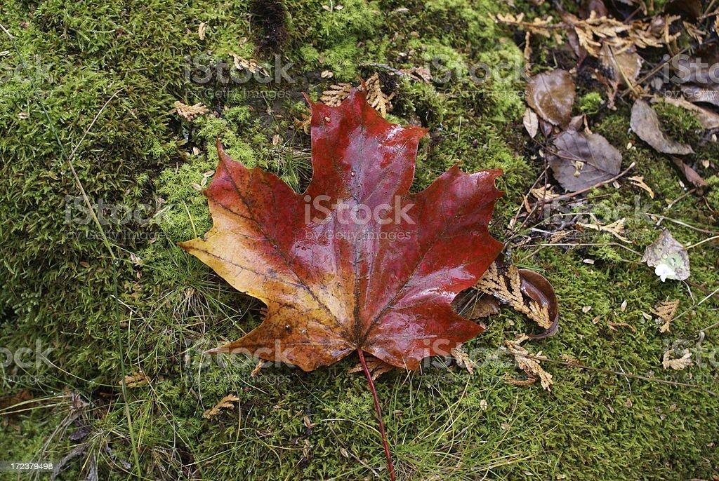 Oh Canada! royalty-free stock photo