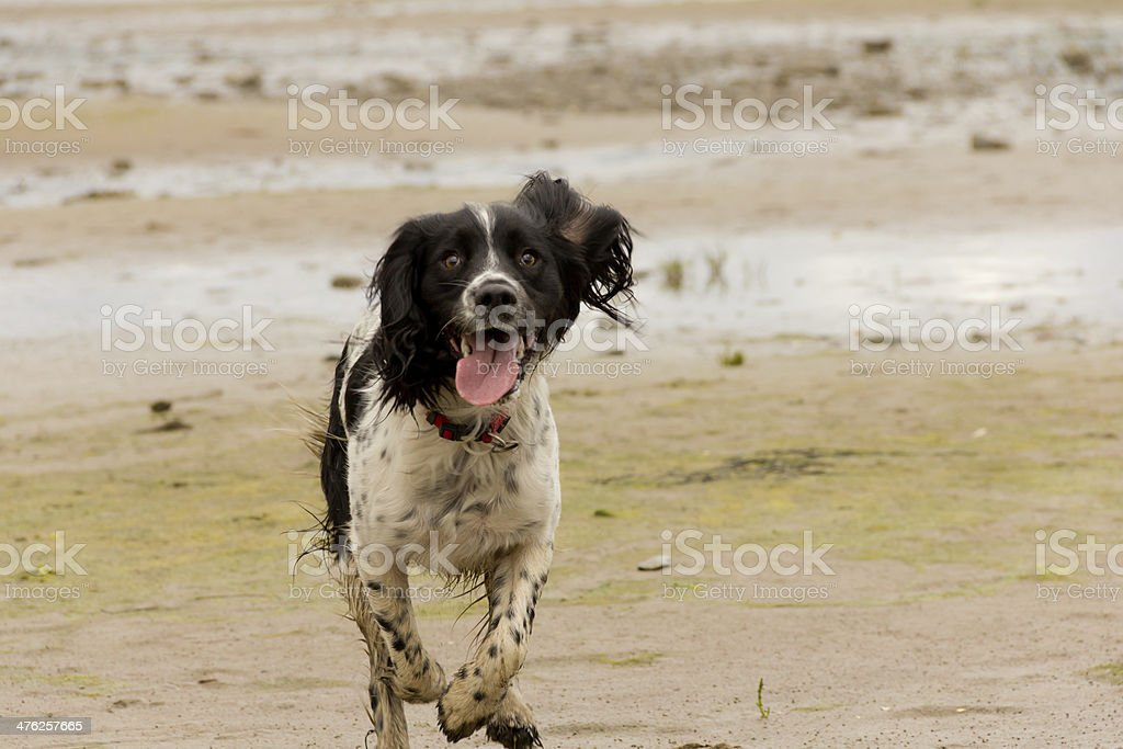Oh I do love to be besides the seaside. stock photo
