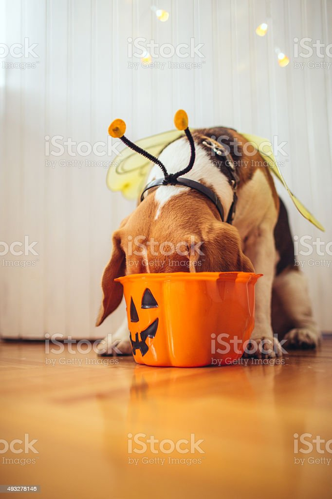 Oh those Halloween candy stock photo