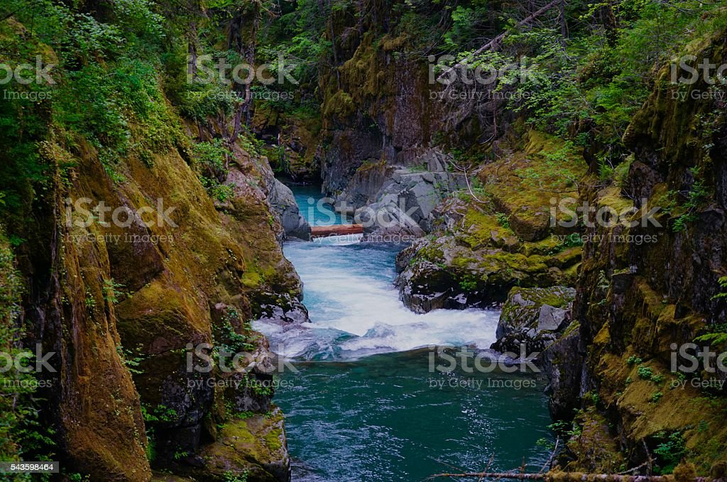 Ohanapecosh River Canyon stock photo