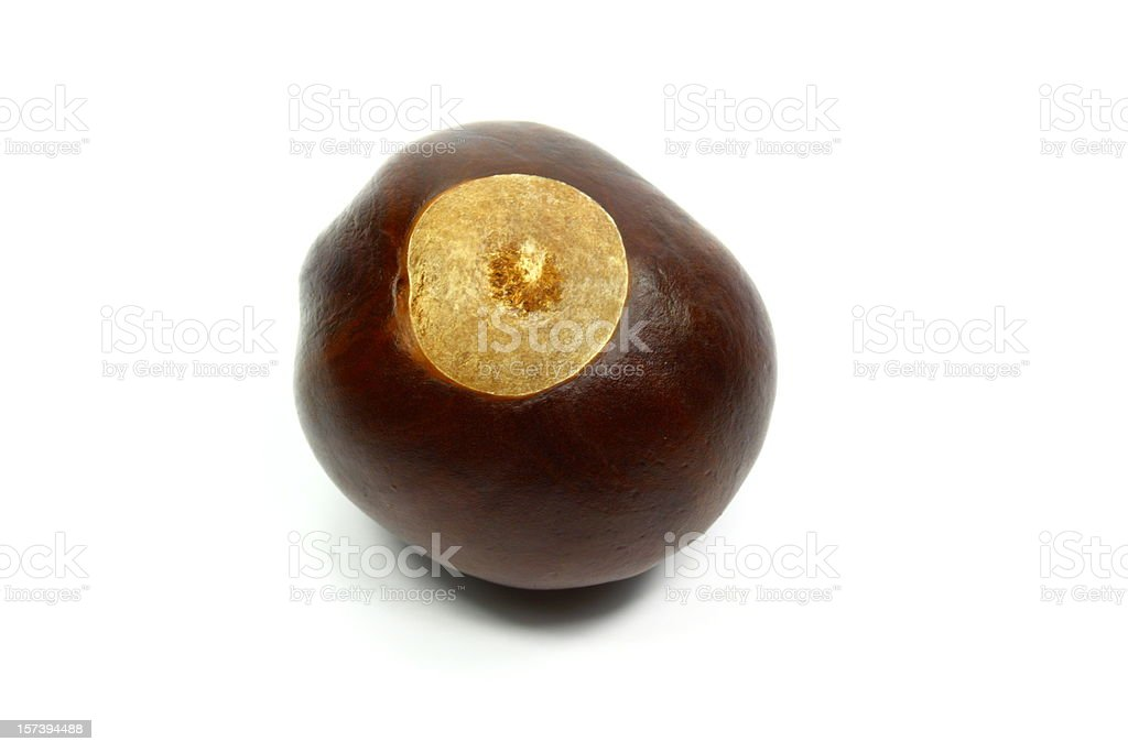 Ohio buckeye isolated on white background stock photo