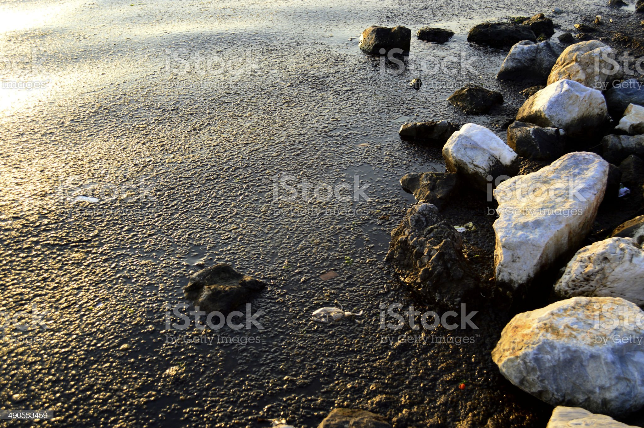 Oil and Sea Pollution royalty-free stock photo