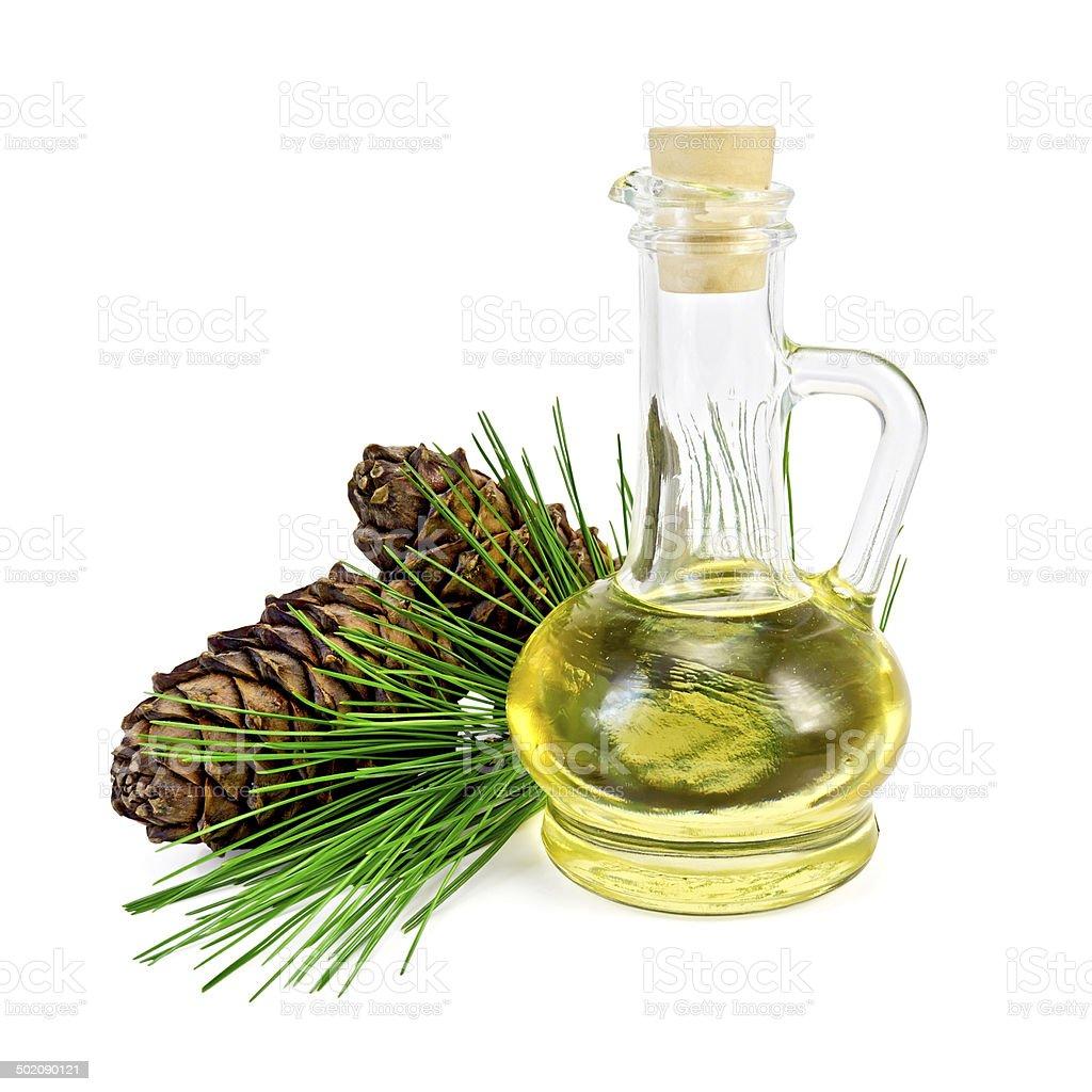 Oil cedar with cones stock photo