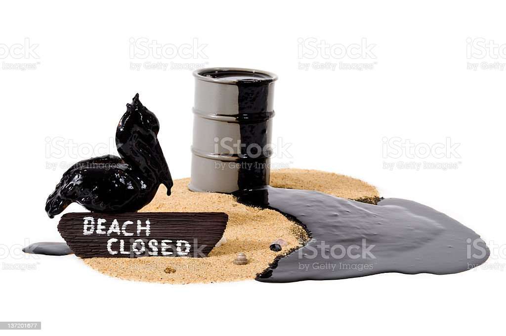Oil covered pelican - Beach Closed stock photo