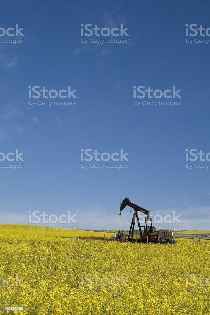 Oil Industry Pumpjack in Canola Field royalty-free stock photo