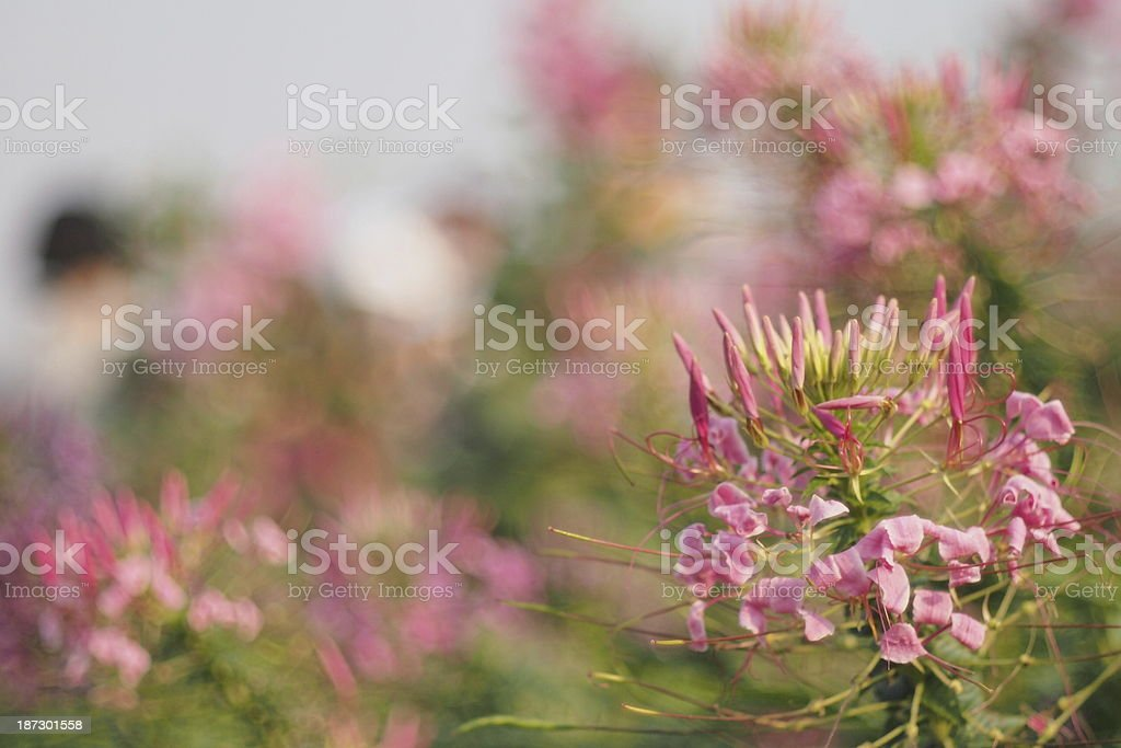 oil paint flower stock photo