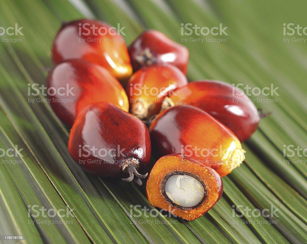 Oil palm fruit royalty-free stock photo