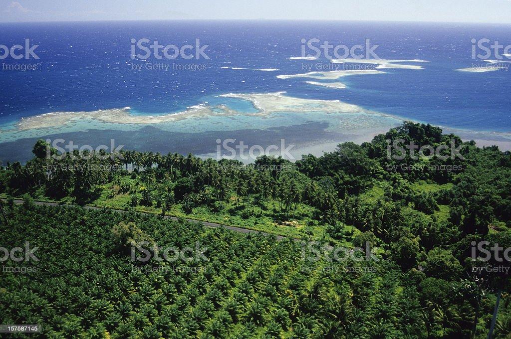 Oil Palm Plantation, WNBP royalty-free stock photo