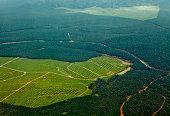 Oil Palm Plantations