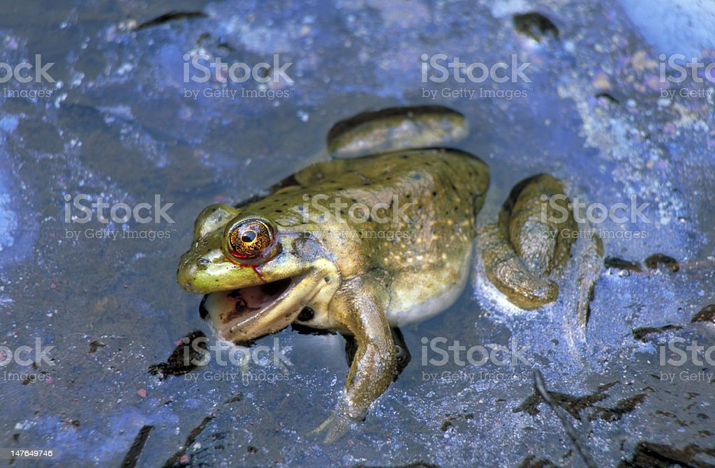 Oil Spill and Wildlife stock photo