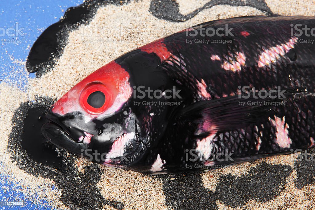 Oil spill disaster with fish royalty-free stock photo
