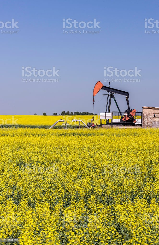 Oil well pumpjack in a field of canola stock photo