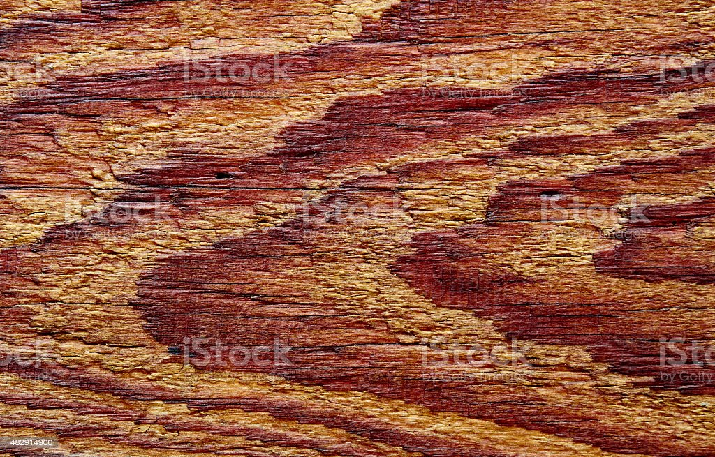 oiled pine board royalty-free stock photo