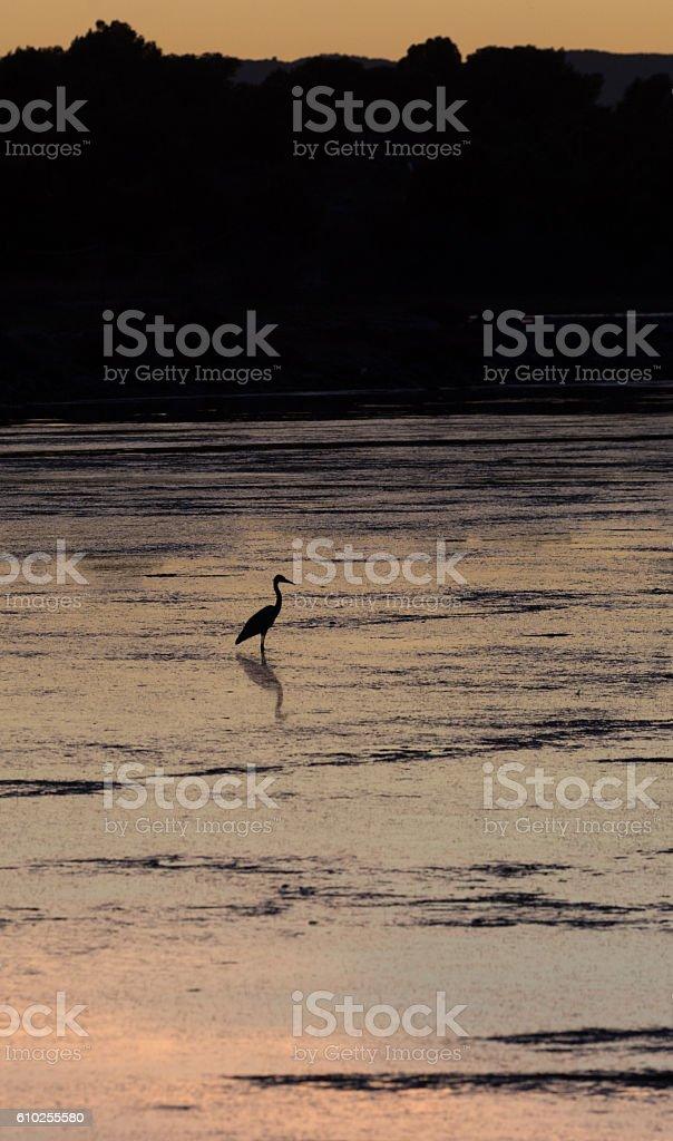 Oiseau au coucher du soleil stock photo