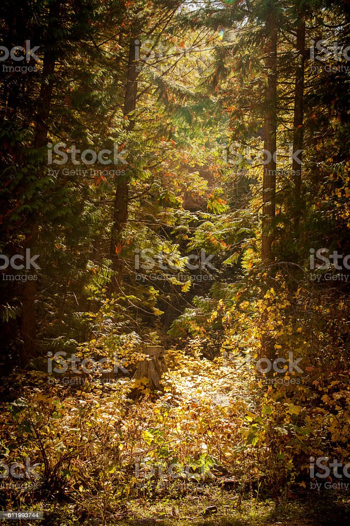 Okanagan Autumn stock photo